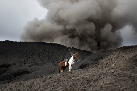 smut: Horse and Mount Bromo is an active volcano and part of the Tengger massif, in East Java, Indonesia.
