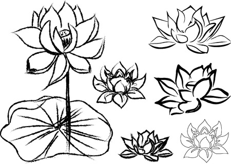 The lotus flowers are drawn in strokes