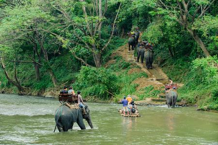 north woods: Elephant trekking through jungle in northern Thailand