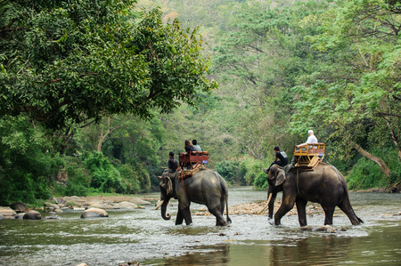 tourism: Elephant trekking through jungle in northern Thailand