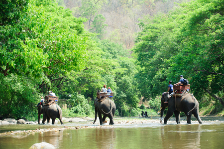 Elephant trekking through jungle in northern Thailand