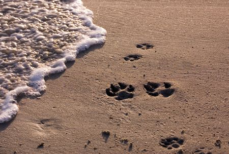 Dog paw prints on beach at sunset. Stock Photo - 1148717