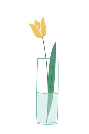 One yellow tulip with a leaf in a transparent glass-like vase. Colored isolated illustration in doodle style on white background. Illustration