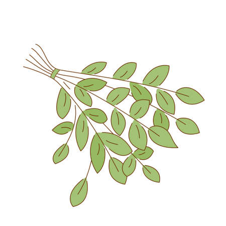 Broom from tree branches for massage in the steam room. Colored isolated illustrations in doodle style with an outline on a white background.