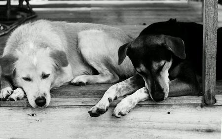 white dog: The dog is sleep