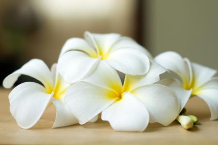 tahitian: Plumeria flowers fresh or Frangipani tropical flowers on wood table