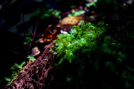 Blurry and soft focus of Ferns and moss in forest.