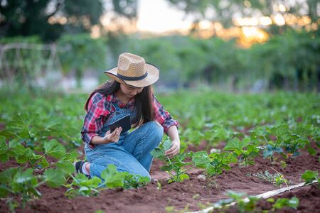 Asias women Agronomist and farmer Using Technology for inspecting in Agricultural and organic vegetable Field
