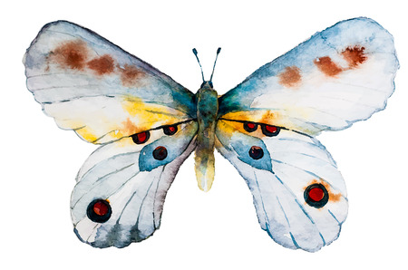 schmetterlinge blau wasserfarbe: Aquarell Schmetterling Vektor