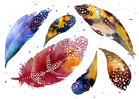 dove: Set of watercolor feathers Illustration