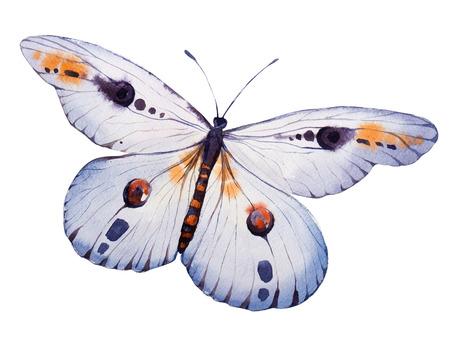 schmetterlinge blau wasserfarbe: Hand bemalt Aquarell Schmetterling. Illustration für Ihr Design Lizenzfreie Bilder
