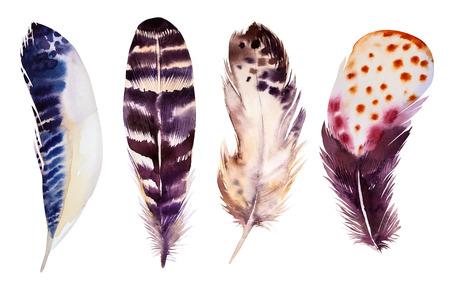 손으로 그린 수채화 깃털 설정합니다. 그림 흰색으로 격리합니다. T 셔츠, 초대장, 웨딩 카드 디자인. 밝은 색.