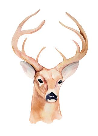 Deer head. Design for T-shirt and  wedding invitation.  Handmade illustration.