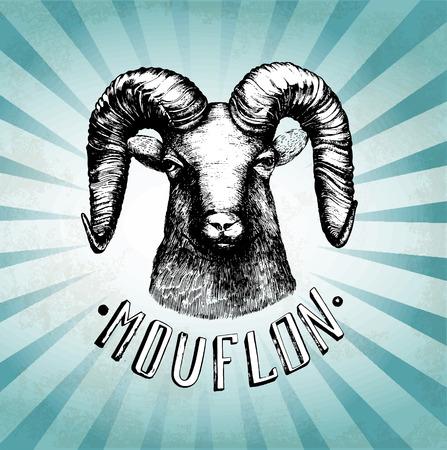 bull horn: Vector illustration with moufflonl head. Hand drawn sketch.