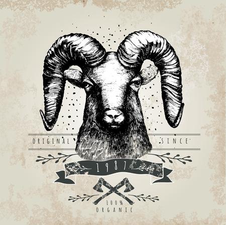 ram horn: Vector illustration with moufflonl head. Hand drawn sketch.