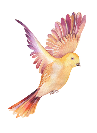 twit: Watercolor illustration of a yellow  bird flying, isolated on white background. Original  seasonal feather art. Watercolour parus motive.