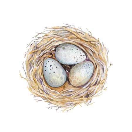 dibujado a mano nido de pájaro arte de la acuarela con los huevos, el diseño de Pascua. estilo retro, ilustración de la acuarela aislado en blanco. estilo boho natural. Nido principal motivo, la codorniz, la candidiasis, nacimiento, árbol. Foto de archivo