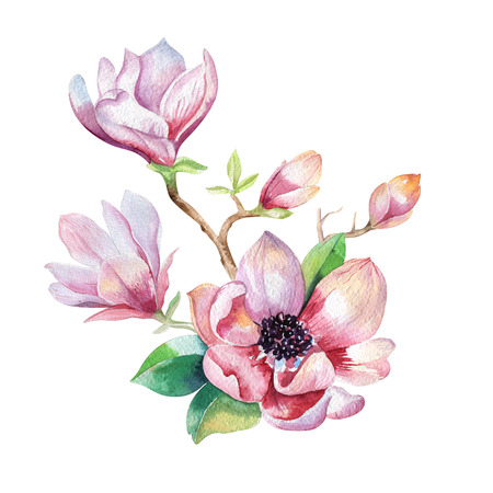 Painting Magnolia flower wallpaper. Hand drawn Watercolor floral illustration. Fower decorative  natural element. Vintage art  watecolour background.