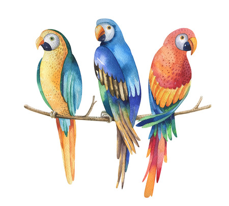 endothermic: Tropical watercolor birds isolated on white background. Macaws parrot Art.colorful watercolour illustration for your design Stock Photo