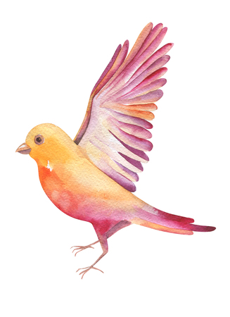 twit: Watercolor   illustration of a yellow bird flying, isolated on white background. Original seasonal feather art. Watercolour parus motive.  Design for bird day.