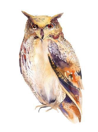 lechuzas: pájaro de la acuarela del búho mano pintura hecha aislado sobre fondo blanco. Foto de archivo