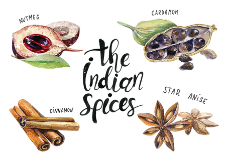 set of spice, drawing by watercolor, hand drawn illustration. Watercolor hand drawn illustration with different spices