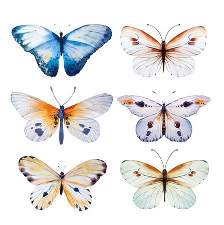 mariposa azul: mariposa de la acuarela. ilustración del arte del verano de la vendimia para la tarjeta de diseño de la boda, insectos, bandera belleza flor y así sucesivamente. Foto de archivo