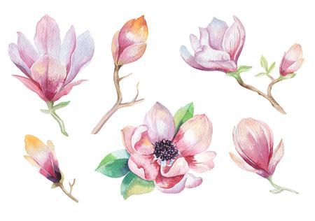 Pintura de la magnolia Flor de papel tapiz. Dibujado a mano Ilustración de la acuarela floral. Fower elemento decorativo natural. Antecedentes de la técnica watecolour la vendimia.