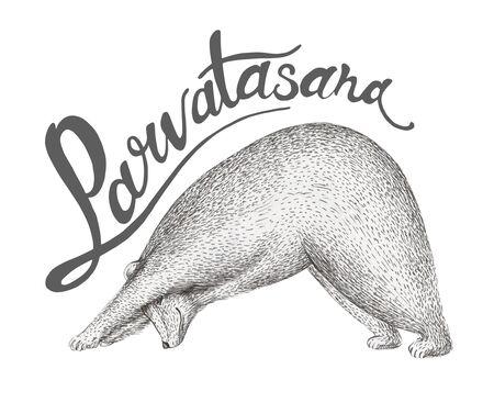 pranayama: illustration of fun a bear isolated on vintage background. Print posture of morning practice pranayama asana pose yoga. Spirit graphic character. Workout, sport