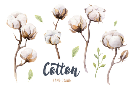 watercolour painting: Set of hand drawn watercolour Cotton boll. Isolated watercolor painting on white background. Cotton  branch flower print decoration.