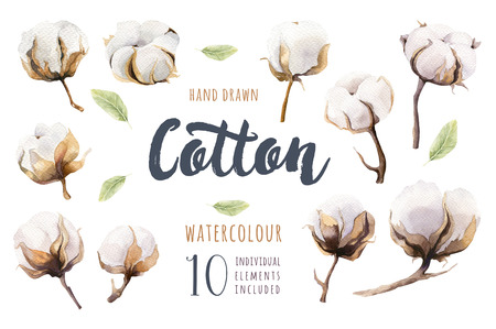 Set of hand drawn watercolour Cotton boll. Isolated watercolor painting on white background. Cotton  branch flower print decoration.
