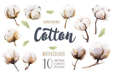 Conjunto de mano dibujado acuarela cápsula de algodón. Pintura aislada de la acuarela en el fondo blanco. Decoración de la impresión de la flor de la rama del algodón.