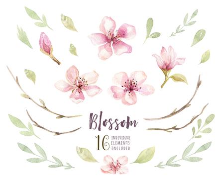 수채화 보헤미안 꽃 꽃 설정합니다. 봄 또는 여름 장식