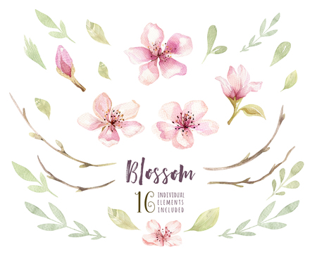 Watercolor boho blossom flower set. Spring or summer decoration Imagens