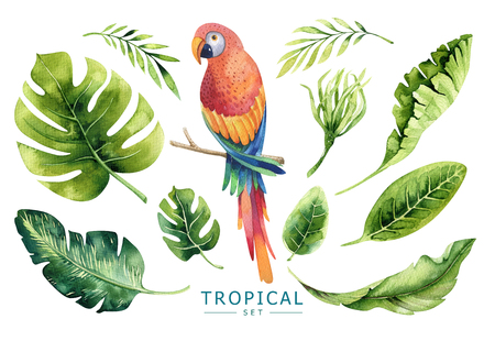 Hand drawn watercolor tropical plants set and  parrot. Exotic pa Stock Photo