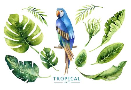 Hand getekende aquarel tropische planten set en papegaai. Exotische pa Stockfoto