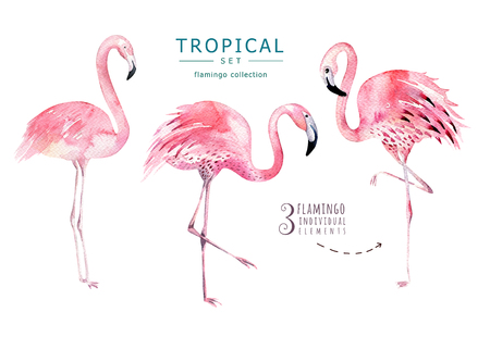 Hand drawn watercolor tropical birds set of flamingo. Exotic bird illustrations, jungle tree, brazil trendy art. Perfect for fabric design. Aloha set 스톡 콘텐츠