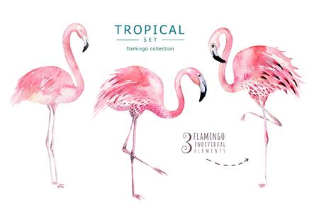 Conjunto de aves tropicales dibujado a mano de la acuarela de flamenco. Ilustraciones exóticas de los pájaros, árbol de la selva, arte de moda del brasil. Perfecto para el diseño de la tela. Aloha conjunto