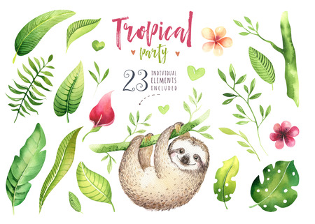 Baby animals sloth nursery isolated painting. Watercolor boho tropical drawing, child tropical illustration. cute palm tree leaves, tropic green texture, exotic flower. Baby shower card.