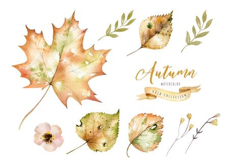빨간색과 노란색의가 수채화 잎 및 열매, 손으로 그린 디자인 단풍 요소 장식의 집합입니다.