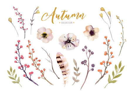 Set of red and yellow autumn watercolor leaves and berries, flowers hand drawn design foliage elements decoration. Stock Photo