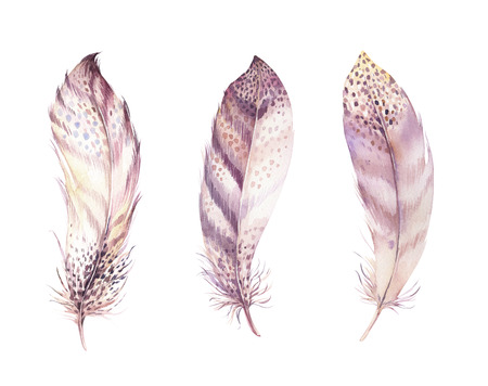 Hand drawn watercolor paintings vibrant feather set. Boho style rose wings. Banco de Imagens
