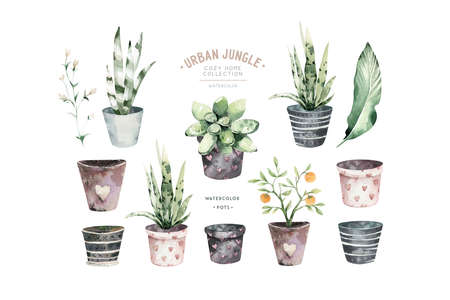 Watercolor hand painted house potted houseplant. green plants in flower pots. Set of floral elements isolated on white. Decorative greenery collection poster, card and scrapbooking design 写真素材