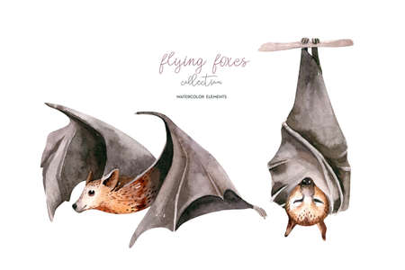 Watercolor cartoon flyinf fox. Sleeping black fruit bat hanging on on tree branch and flying bar. Nursery halloween illustration. White background. Фото со стока