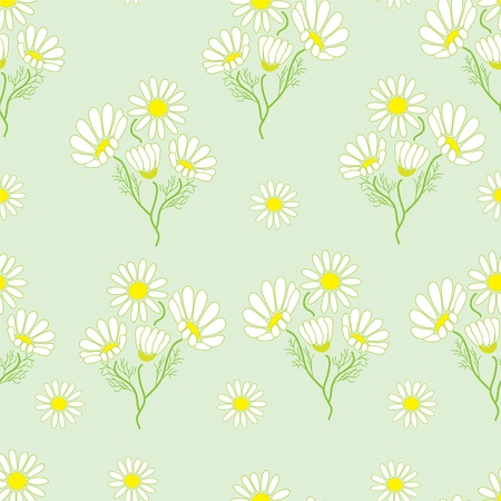 Seamless pattern with chamomile herbs Stock Vector - 9147809