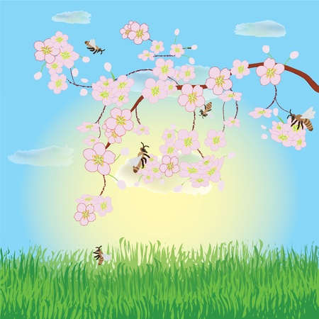 Spring landscape with blooming cherry, sky, sunrise, grass and bees Vector