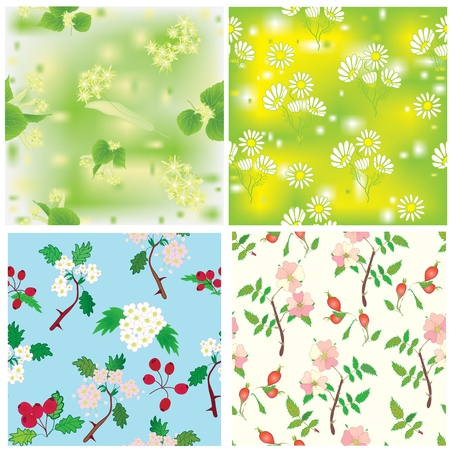 Set of seamless compositions with officinal plants Stock Vector - 10403853
