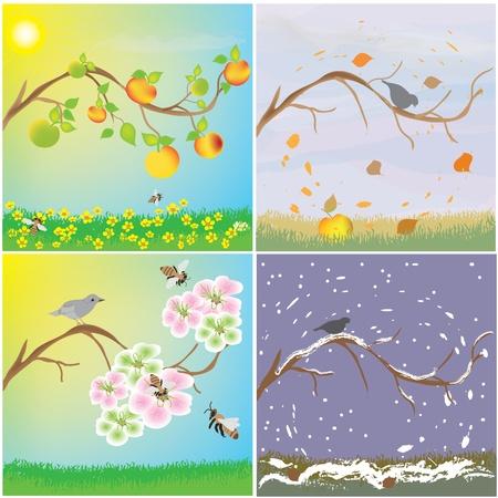 Four seasonal variation of apple tree branch Vector