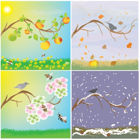Four seasonal variation of apple tree branch Illustration