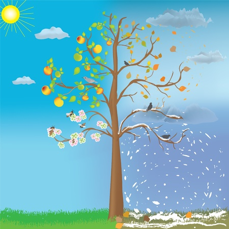 cartoon sun: Apple tree as symbol of four seasonal changes Illustration